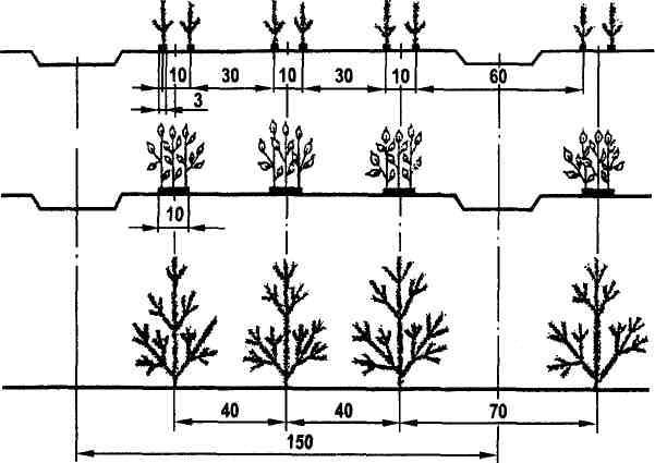 Рисунок 5.1 - Схемы ленточных